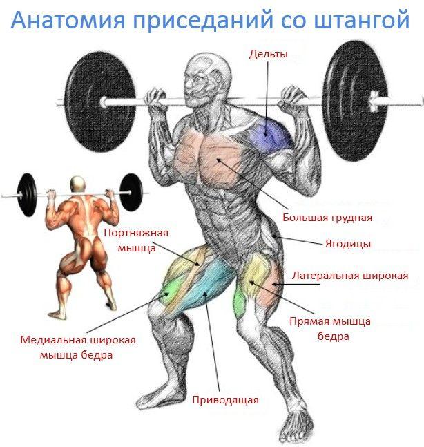 приседания со штангой, мышцы