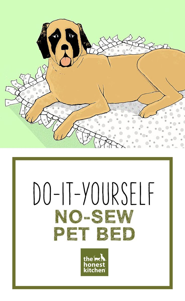 Do-It-Yourself No-Set Pet Bed