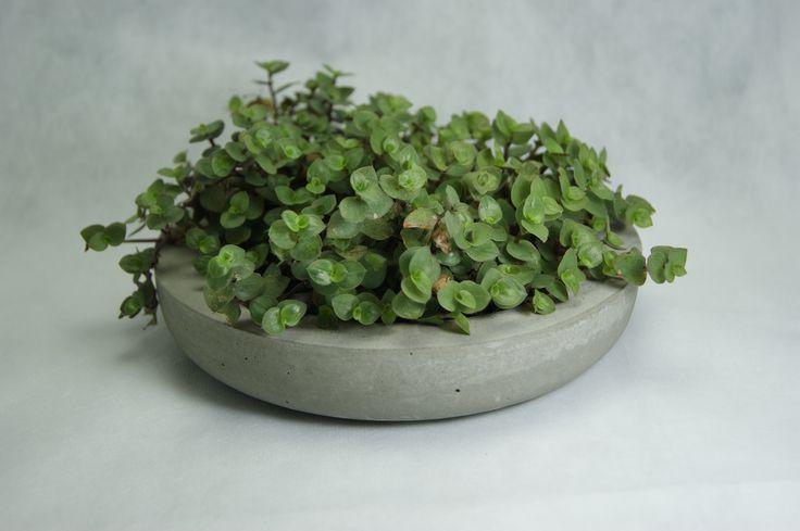 Concepção de Vaso de Cimento Jardim de Suculentas e preço http://ift.tt/2uKDxP4