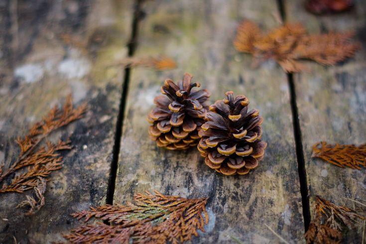 Pine cones by DorottyaS