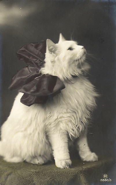 Vintage Cat w/ bow. Looks like my Duncan!