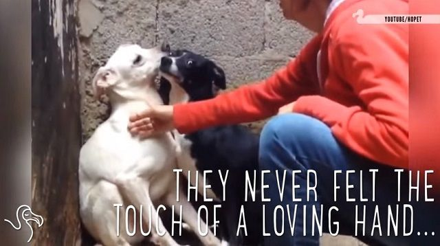 Imagine a life spent in fear and uncertainty…not knowing what it's like to be loved and cared for. That's how stray dogs feel. They don't have a place to call home, they have to find food for themselves, and they …