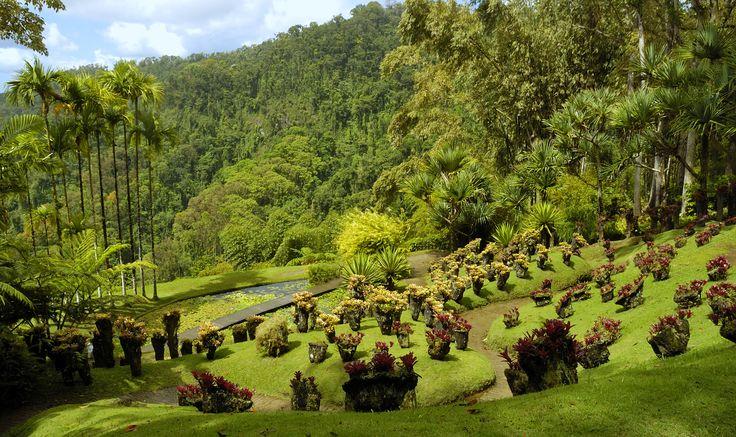 #JardindeBalata #botanicalgarden #martinique #caribbean
