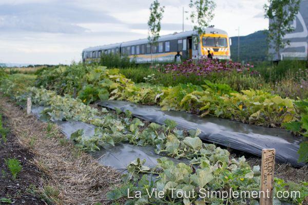 Navette ferroviaire de Charlevoix et potager de l'hôtel La Ferme - #ViréeQC Découverte de Charlevoix par le Train du Massif - Détails sur www.lavietoutsimplement.com