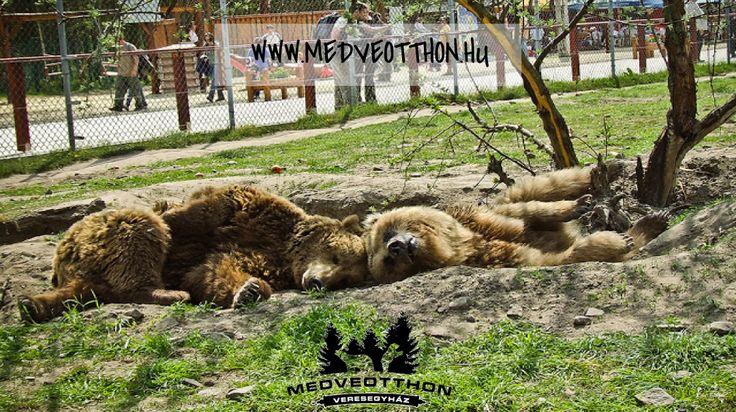 Veresegyházi medvefarm