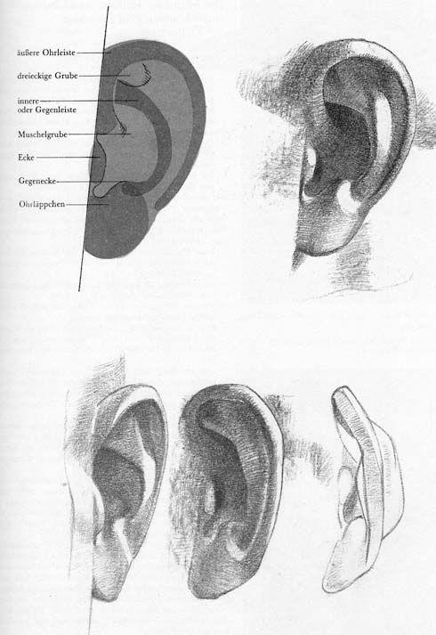 how to draw anatomy book