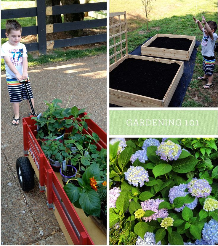 Vegetable Gardening 101 : how to build a simple raised garden bed