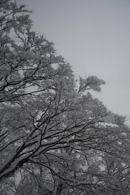 雪化粧 by iyoupapa, via Flickr