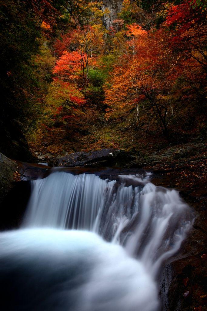 "lifeisverybeautiful: "" Nishizawa Valley, Yamanashi, Japan via PHOTOHITO """