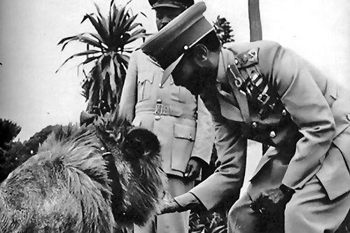 H.I.M. Haile Selassie I Lion3 H.I.M. Haile Selassie I, and his Lions