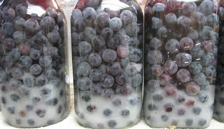 Canning whole grapes for juice concentrate or fruit.