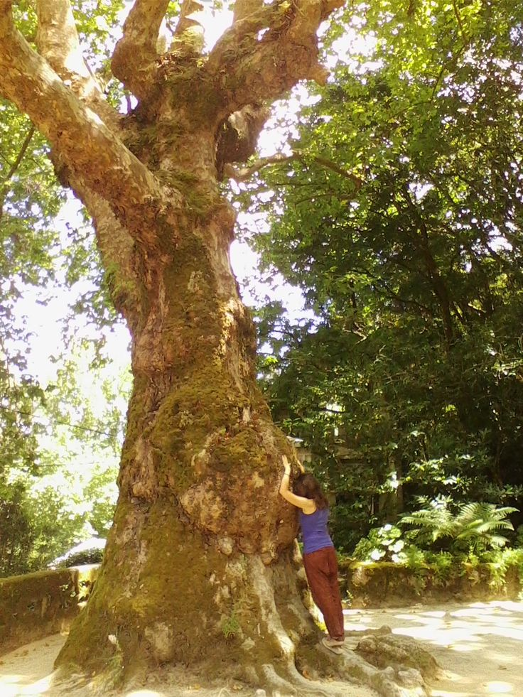 auras tocavam-se. e havia felicidade, plenitude e serenidade nesse toque. Quinta da Regaleira, Sintra.