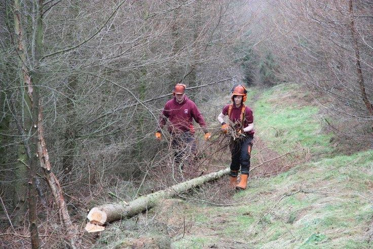 #NorthYorkMoorsNationalPark Apprentices felling larch in Guisborough Woods. #Madebyapprentices