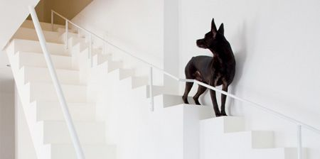 Staircase for Dogs