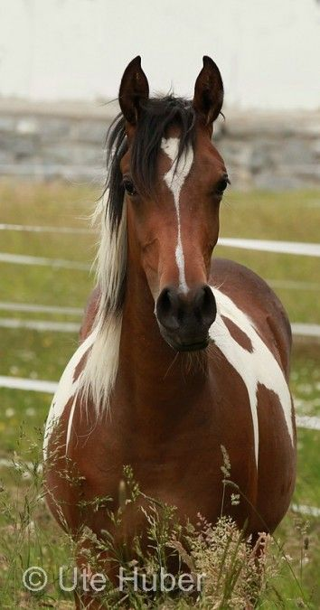 This is a pretty horse. I think it looks like the first horse I ever rode for real.