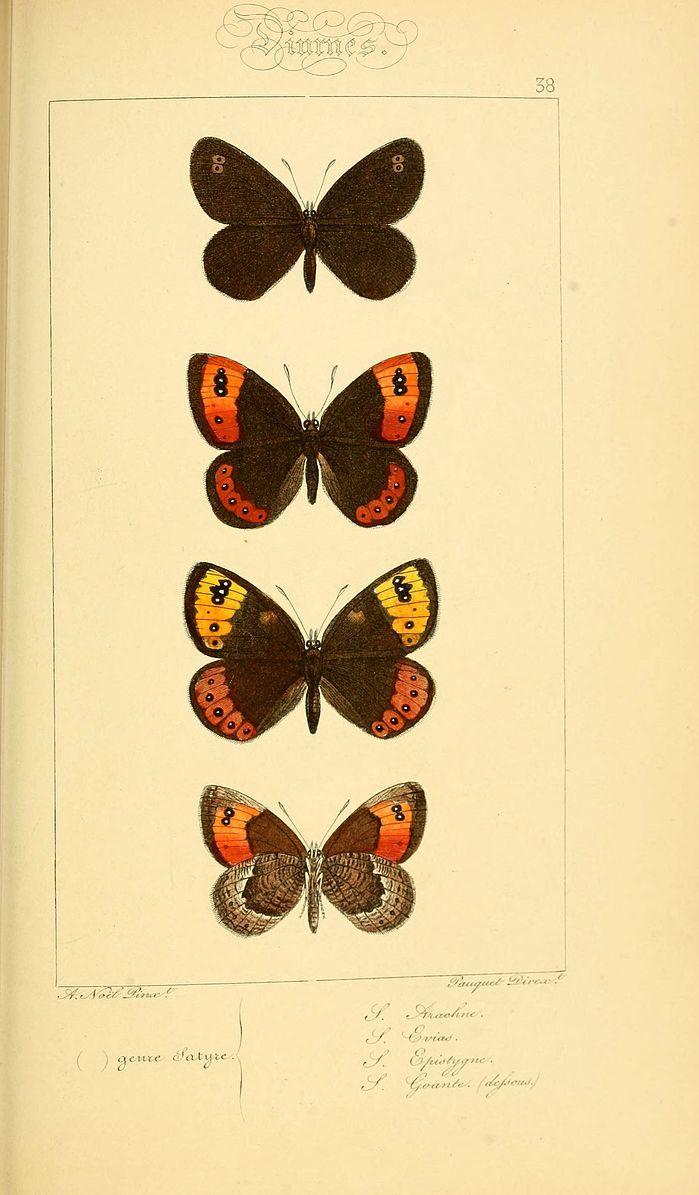 File:Histoire naturelle des lépidoptères d'Europe (Plate 38) (6053854320).jpg