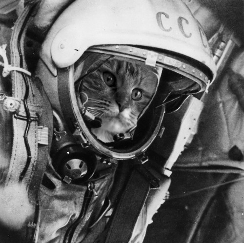 astronaut kitty - photo #13