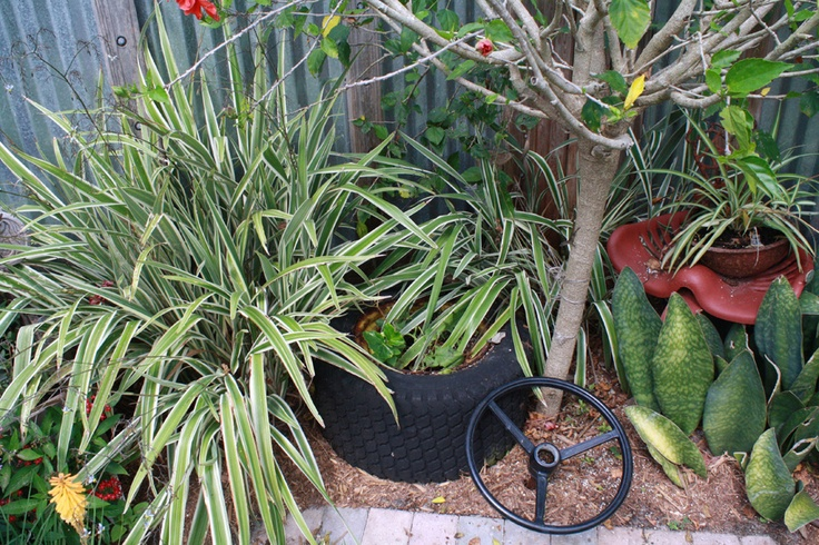 Plant inside of Tire - Hidden Garden