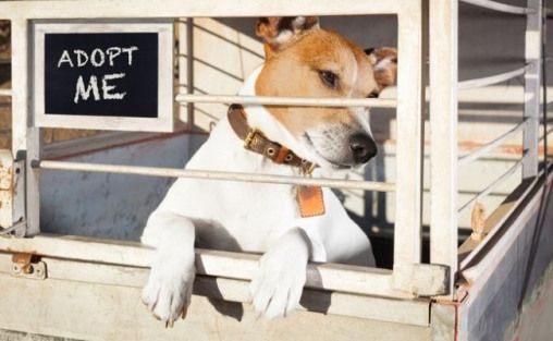 Pin On Shelter Dogs