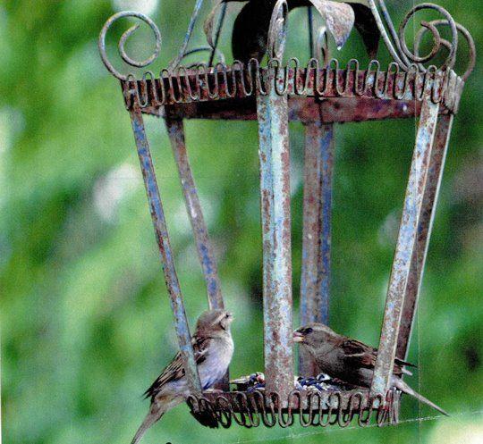 Bird feeder made from old light fixtures