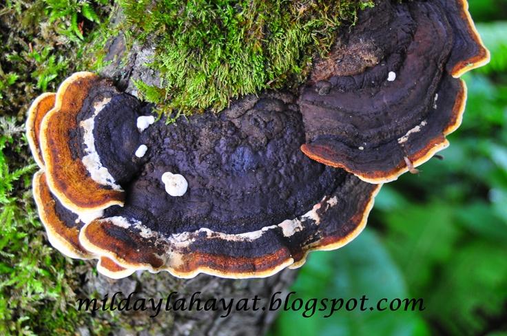 mushrooms :))