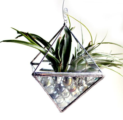 20 best images about air plant ideas on pinterest glass for Air plant holder ideas