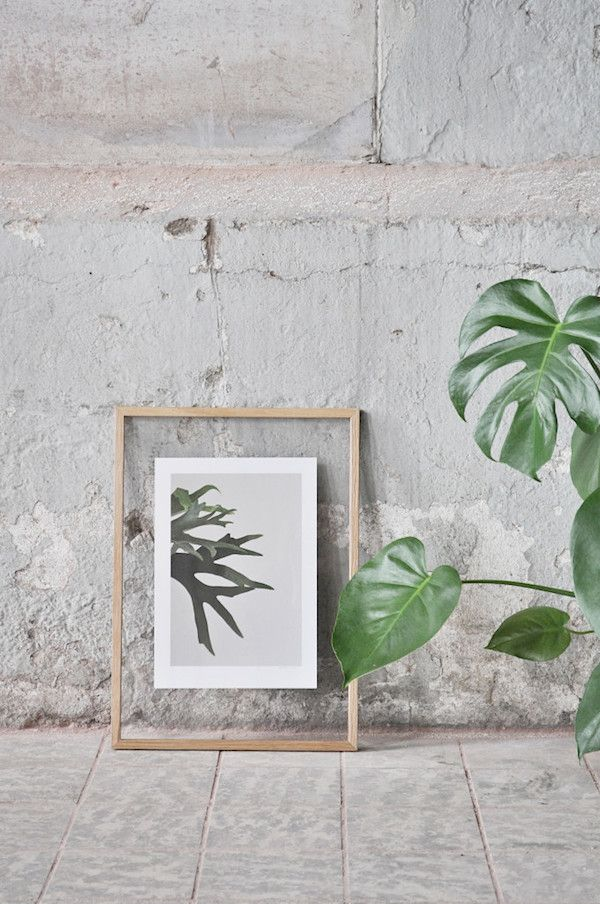 Inspiration for your home | Botanic prints for plant lovers