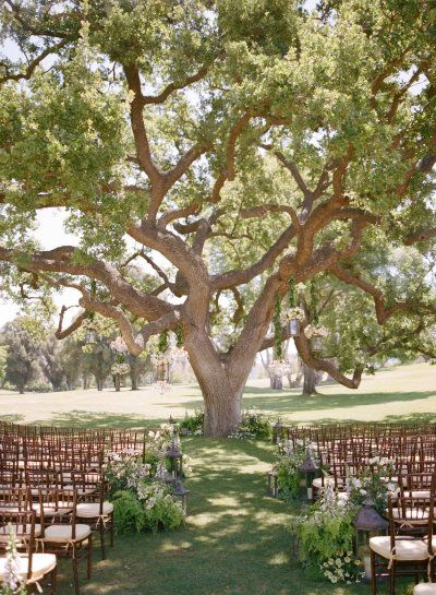 Beautiful ceremony tree