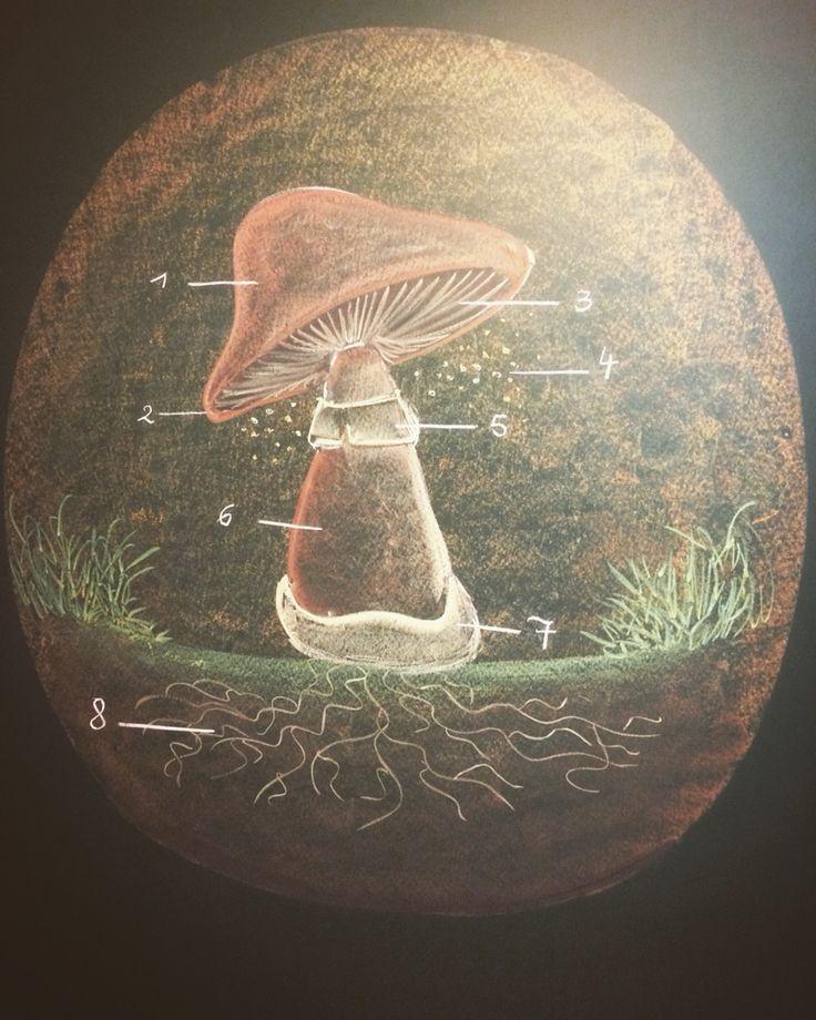Waldorf steiner vrijescholen plantkunde plants mushroom paddenstoel