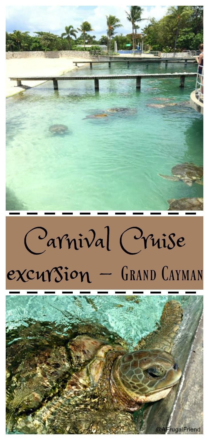 Carnival Cruise excursion - Grand Cayman. Cayman Turtle Farm - perfect for families and I'll tell you my best tips for tackling this excursion, something I did on my own with a child.