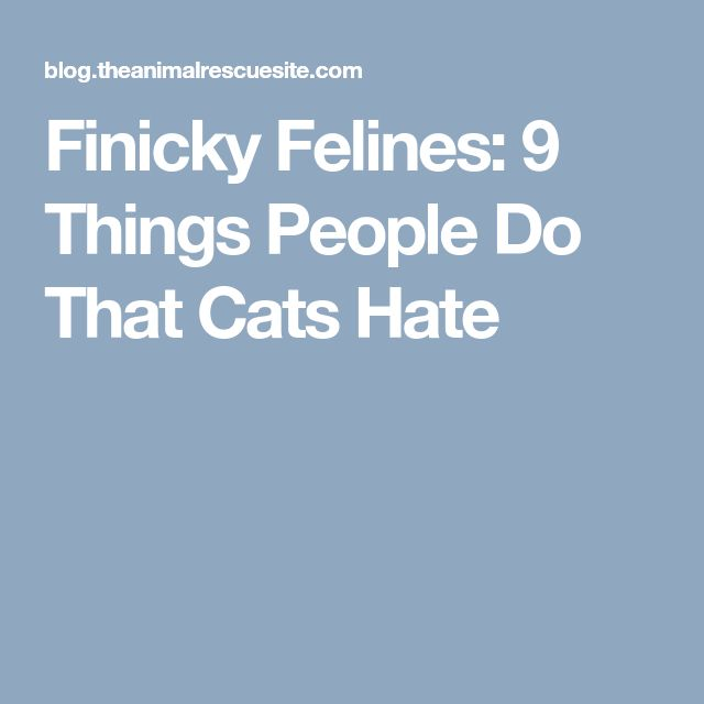 Finicky Felines: 9 Things People Do That Cats Hate