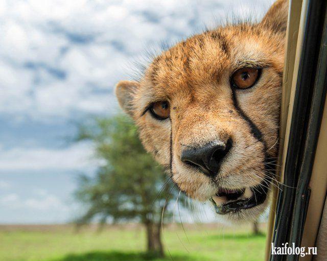 Забавные животные (45 фото)