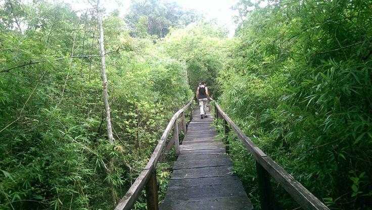 trekking @ Cat Tien National Park