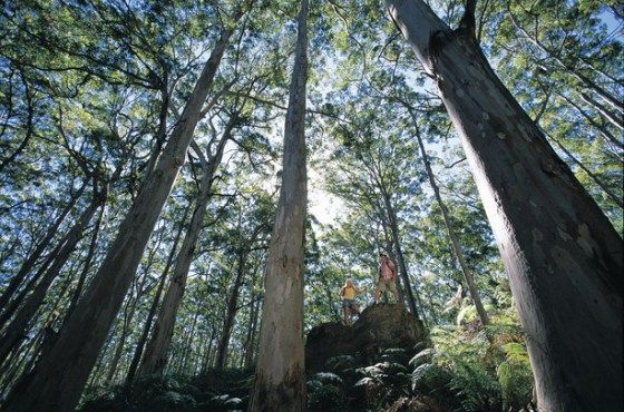 The best hiking trails in Margaret River