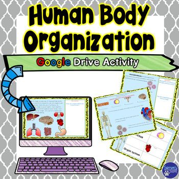 $ 5-7 digital reading activity so that students can learn about how the human body is organized. This activity will introduce students to the four levels of organization; specialized cells, tissues, organs and organ systems. This resource can easily be uploaded to Microsoft OneDrive or Google Drive.