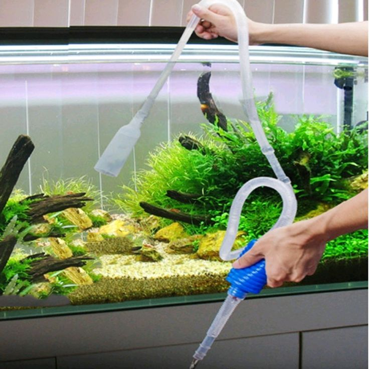 how to clean fish ornaments