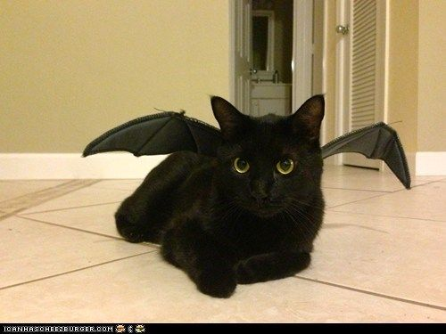 Https Www Pinterest Com Explore Black Cat Costumes