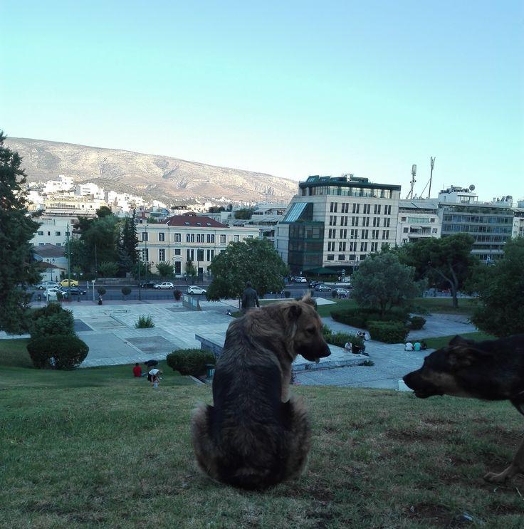 Πικ-νικ με τον φίλο μας!| Αθήνα.