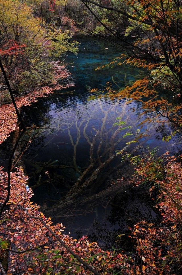 An Underwater Tree in Jiuzhaigou Valley