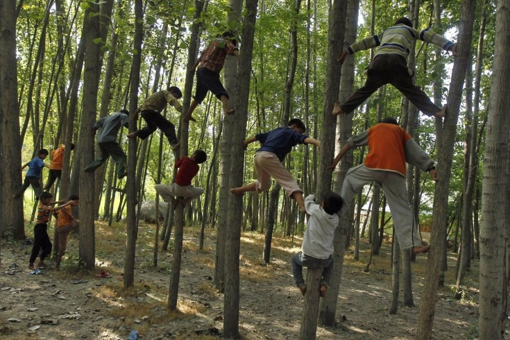 Pictures of the Week: July 27 – August 3 - LightBox: 2Nd Aug 2012, Children Climbed, Climb Trees, August, August 2012, Photo