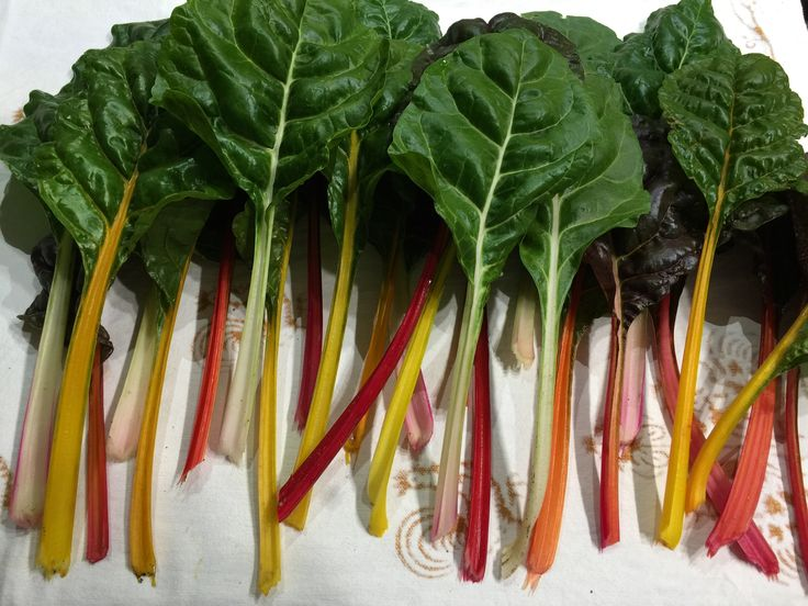 Un arcobaleno di colori e di benefici per la salute. http://www.cuocogoloso.it/bietole-arcobaleno/ #bietolearcobaleno #bietole #bietolebenefiche #elisirdilungavita #ortaggiperlasalute