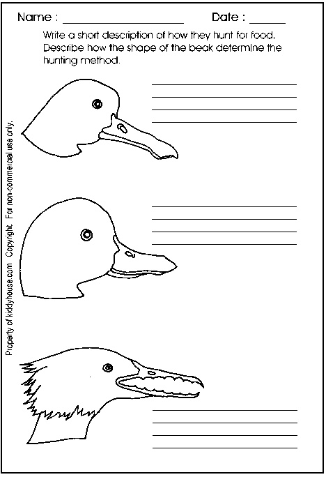 36 Best Ducks Images On Pinterest Classroom Ideas Preschool And Ducks
