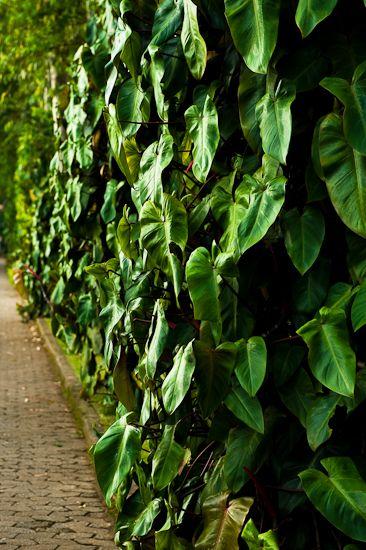 Burle Marx garden at Inhotim