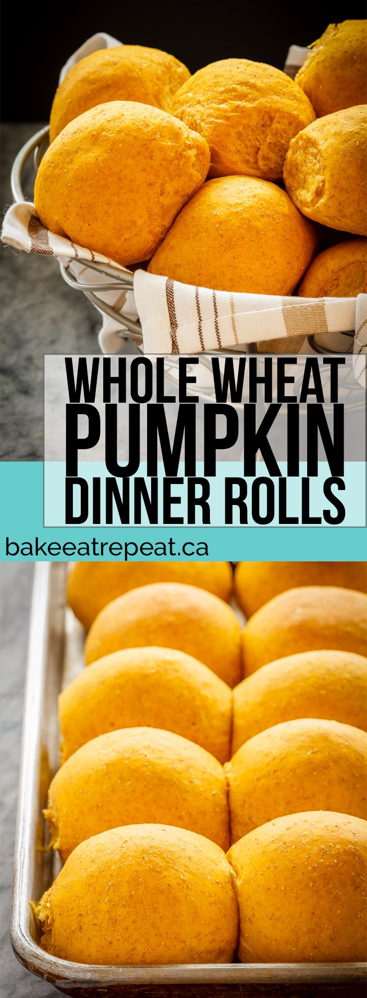These whole wheat pumpkin dinner rolls are soft and fluffy and so easy to make. Plus they are amazing piled with turkey or ham for lunch!