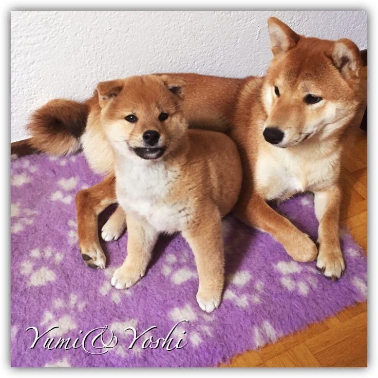 Yumi&Yoshi