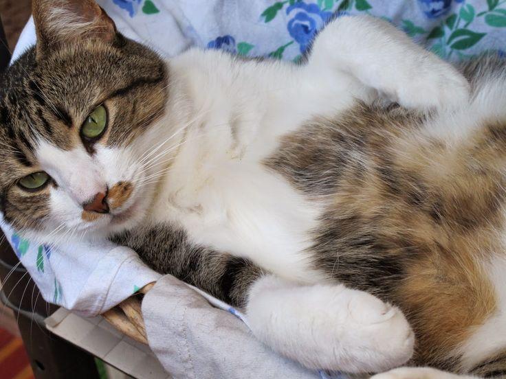 gatto, pigro, blog