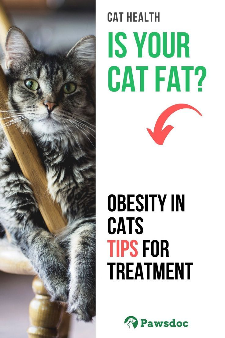 Pin on Cat Health and Wellness