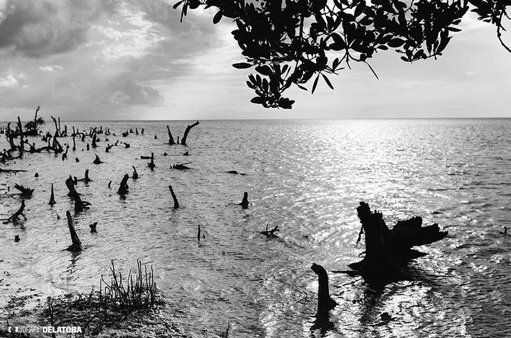 Holbox in black & White  #josafatdelatoba #cabophotographer #holbox #landscapephotography #mexico #quintanaroo #sea
