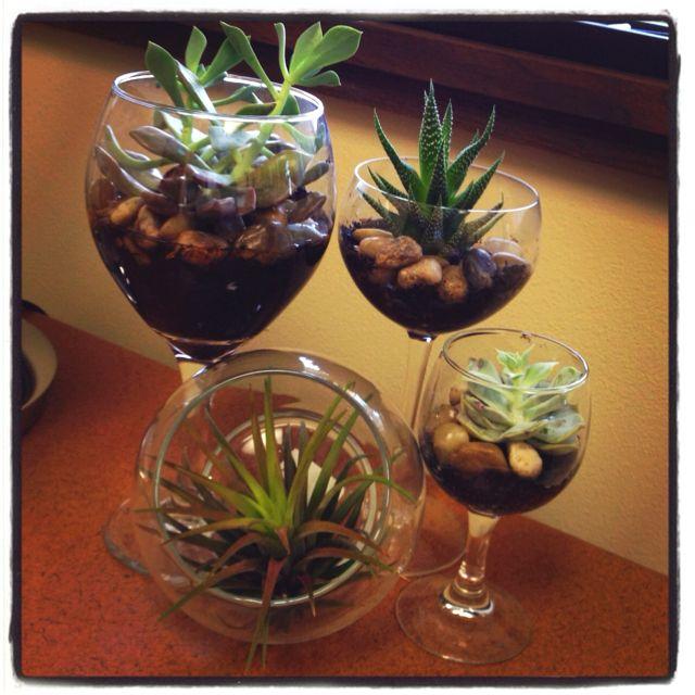 Wine glass terrariums!