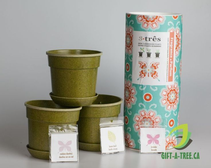 Tre-Fragrance. Includes French Lavender, Lemon Basil, and Dianthus. Find at: http://www.gift-a-tree.ca/apps/webstore/products/show/3744919